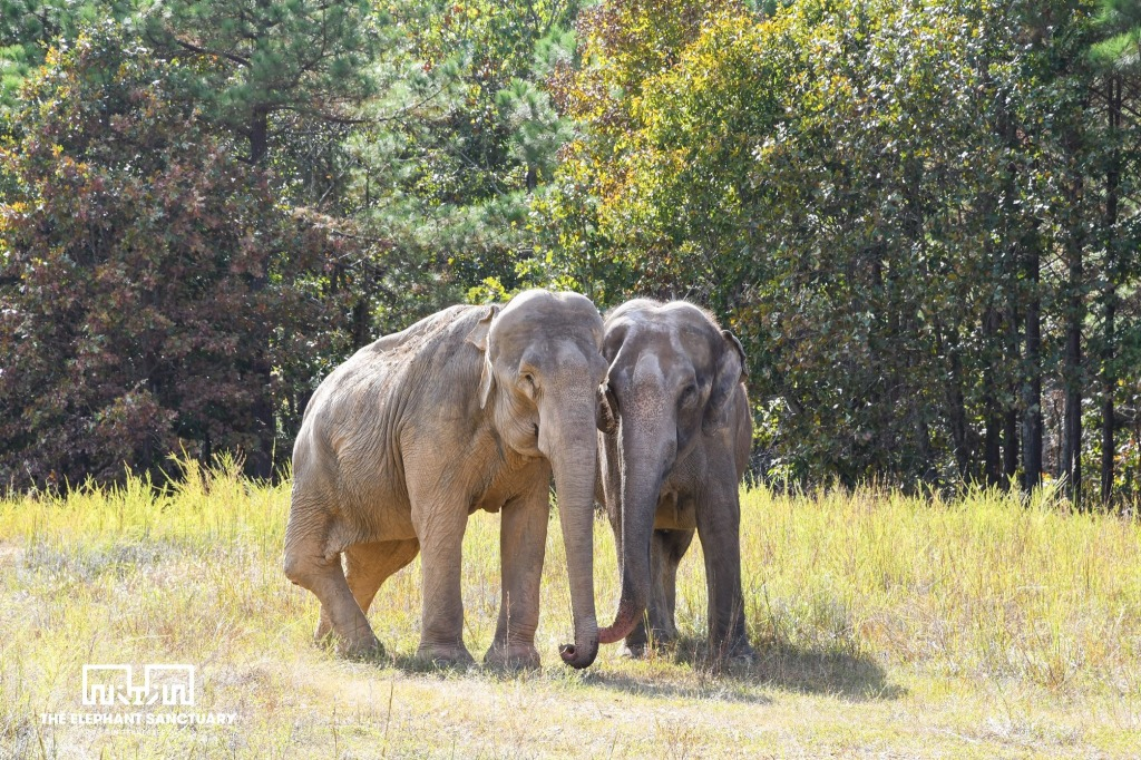 The Elephant Sanctuary in Tennessee