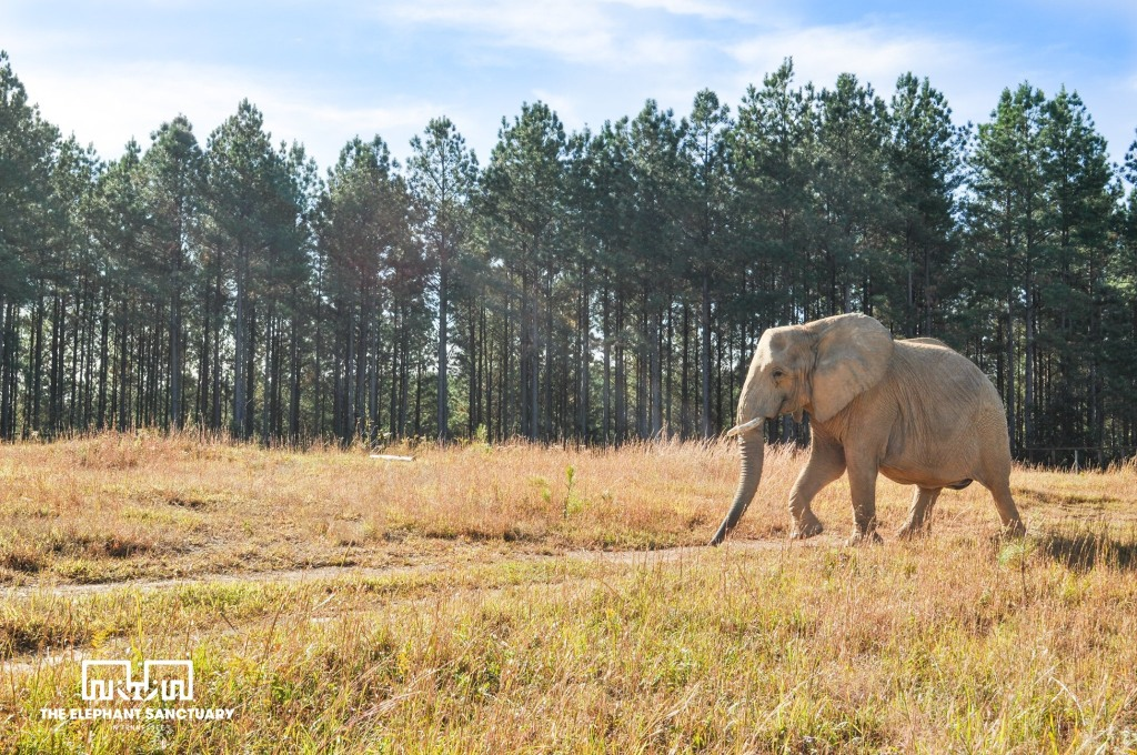 Elephant Sanctuary in Tennessee